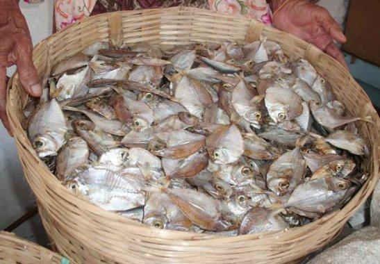 Ikan Ceria (Ikan Bete-Bete) » Budaya Indonesia
